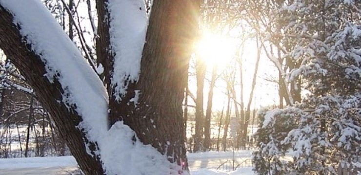 sun shining through tree branches in snowy woods